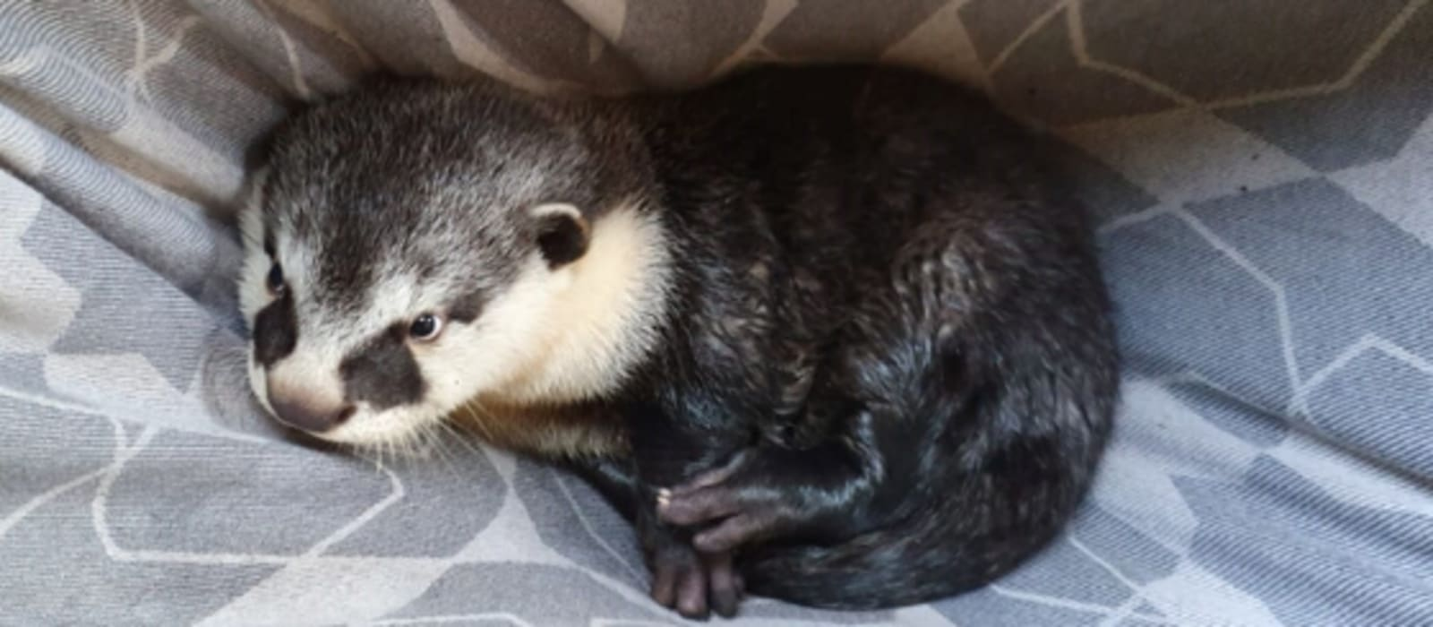 Otter Enclosure Appeal